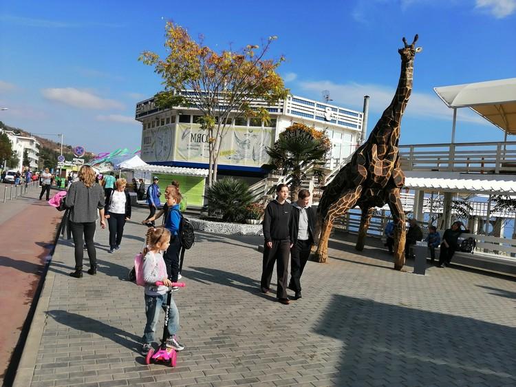 Теперь и в Алуште есть жираф.