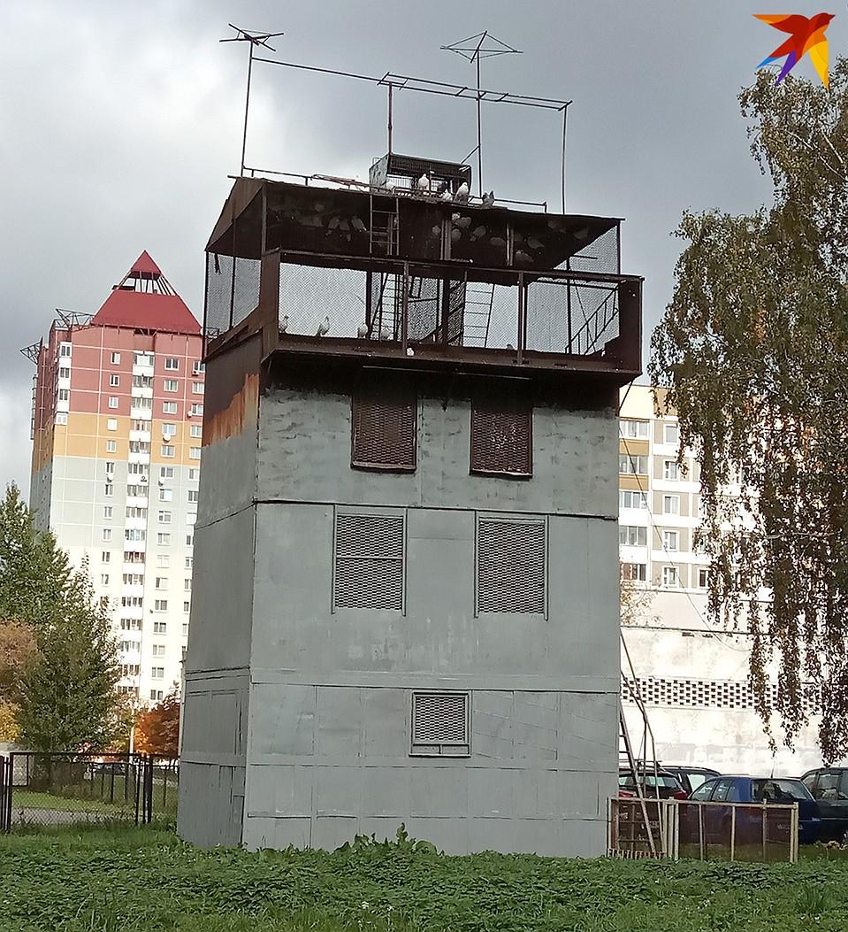 Голубятня у Геннадия Строева не маленькая - метров семь в высоту. Фото: Евгений ПРОКОФЬЕВ