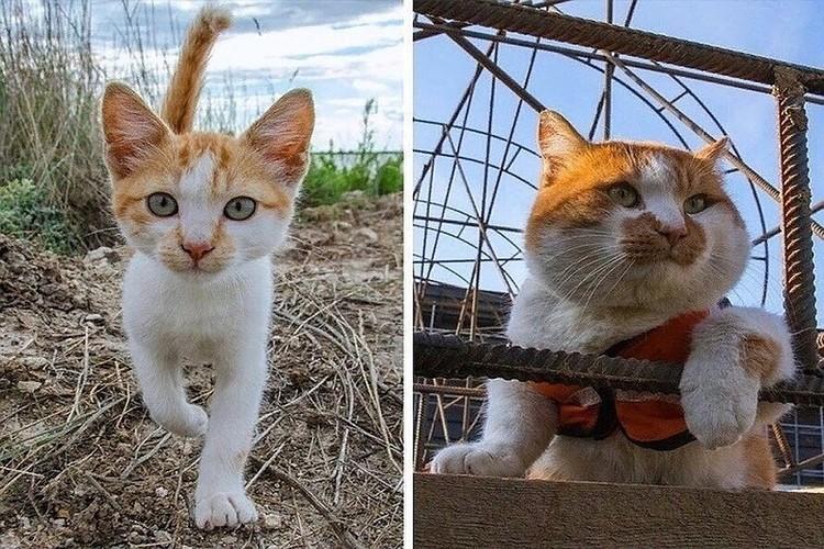 Мостик котенком и сейчас. Фото: vk.com/cat.the.most