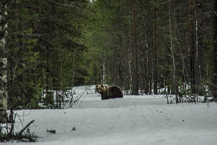 Из-за медведей жители деревни, и даже опытные охотники, боятся лишний раз выходить за околицу.ФОТО: Сергей СТИРЛИНГ
