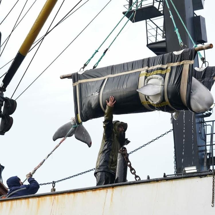 На этот раз ученые решили выпускать узников «китовой тюрьмы» в бухте Успения