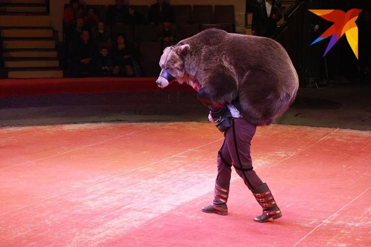 Медведи ездят не только верхом на буйволах, но и дрессировщиках!