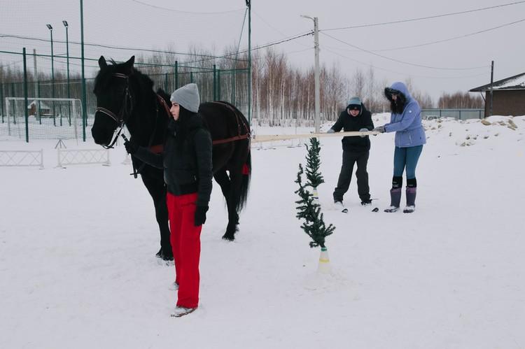"""Занятия по скиджорингу теперь проходят в центре каждую зиму Фото: центр """"Добрая лошадка"""""""