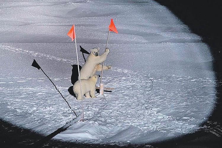 «Медвежью вахту» несут 6 человек, а инфракрасный радар на мачте готов засечь мишек издалека. Хотя они и не прячутся! Фото: instagram.com