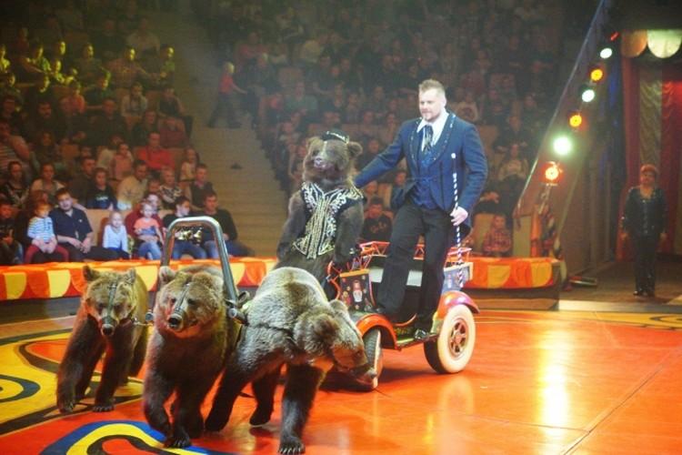 Медведи дрессировщика Александра Филатова из той самой династии на арене Екатеринбургского цирка.