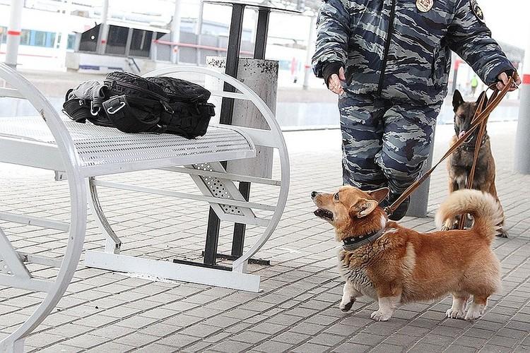 Рыжий служит в Управлении на транспорте МВД России по Нижегородской области уже более шести лет.