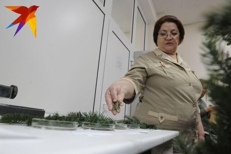 Стволы искусственных елок, как правило, делаются из негорючих материалов. Поэтому исследуют ученые в основном полимерные иголки.