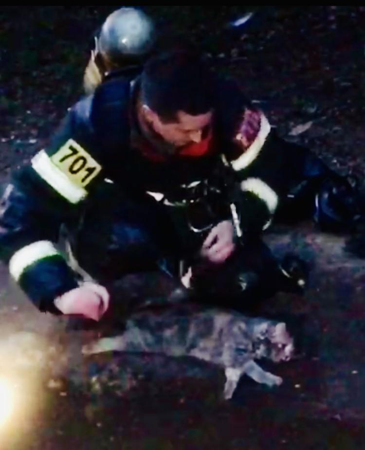 Сначала котик был без сознания. Фото: кадр с видео Пресс-службы ГУ МЧС по Тверской области