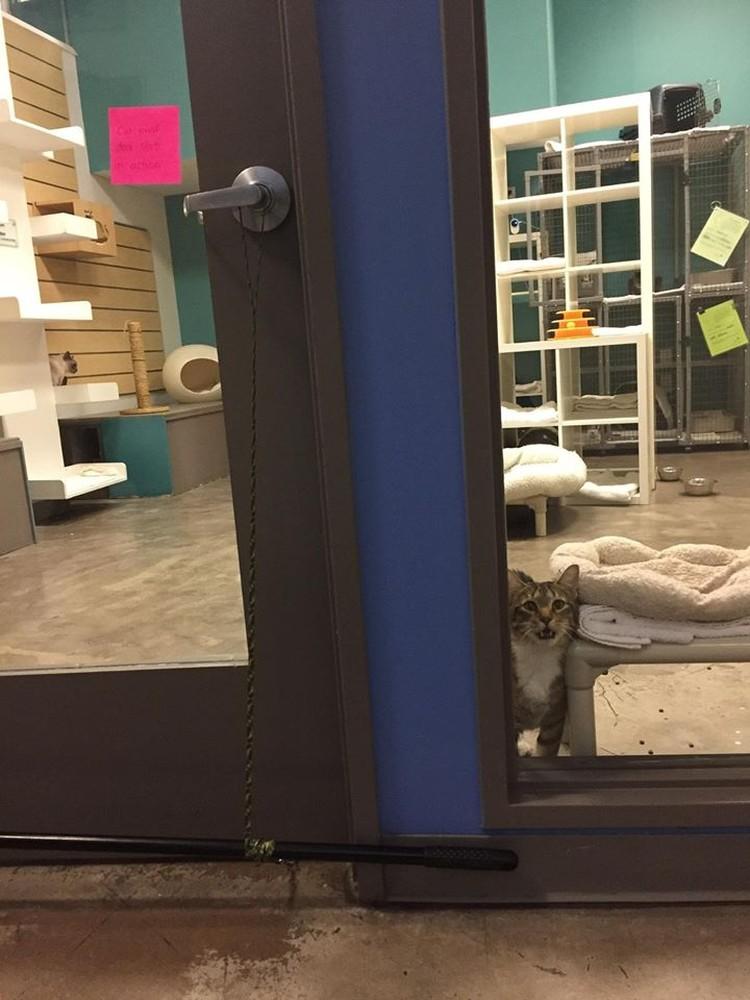 """Пока Квилти был в """"одиночной камере"""", другие коты тосковали по ночным вылазкам"""