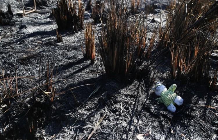 Огонь уничтожил сотни домов