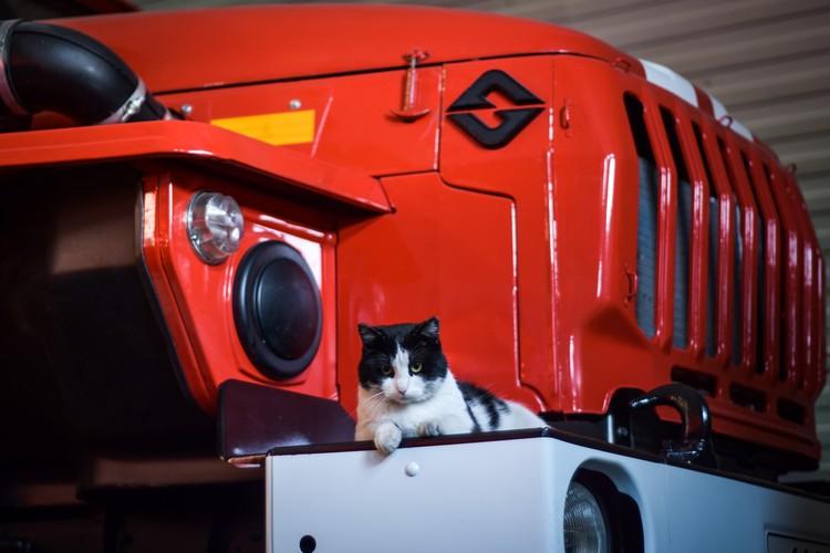 Кот ведет себя в пожарной части, как дома.