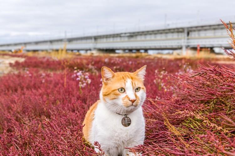 Прораб любит природу. Фото: кот Мостик/VK