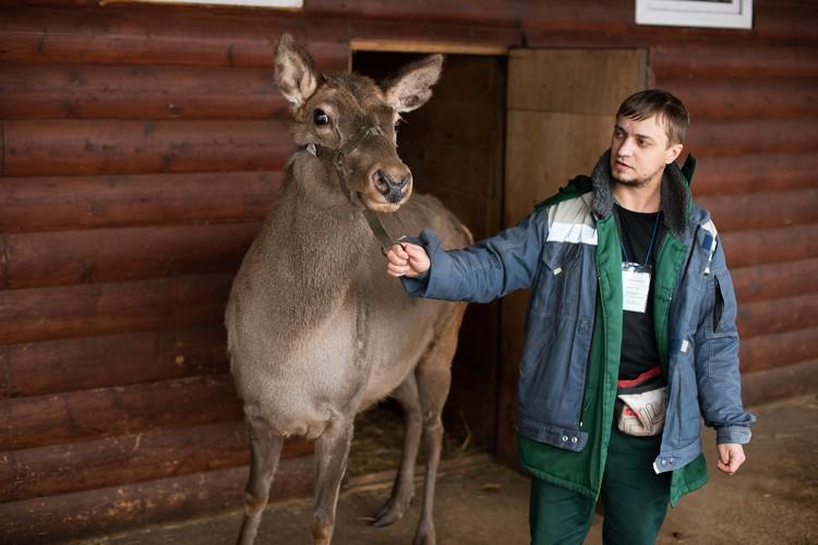 Сейчас животные привыкают к работникам зоопарка, а те в свою очередь - к ним