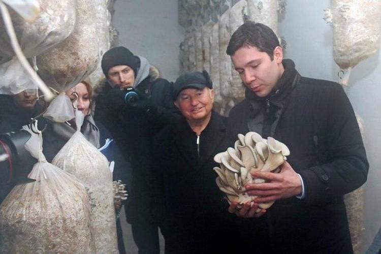 Антон Алиханов рассматривает грибы, выращенные в хозяйстве Юрия Лужкова.