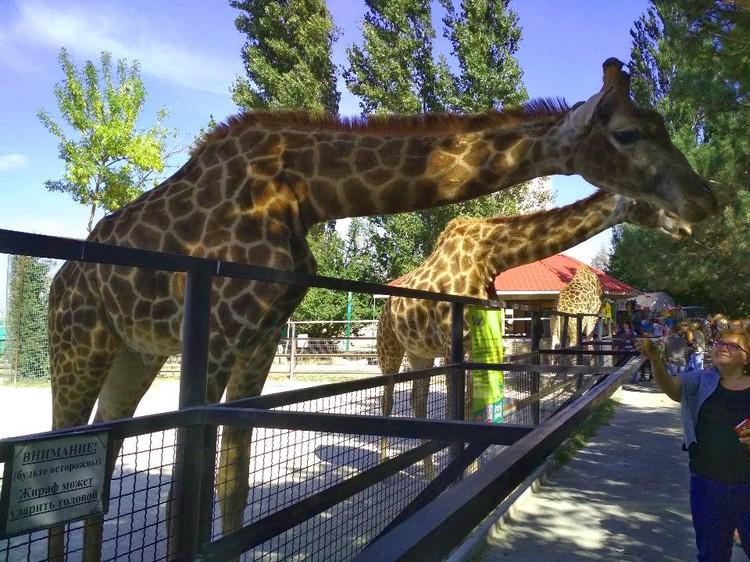 Кормить животных в заповедниках запрещено, даже если это зоопарк
