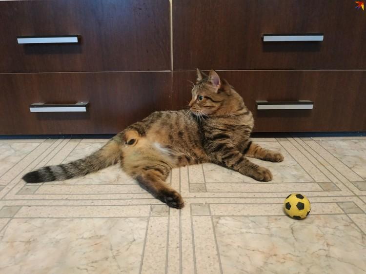 Липтон скачет за любимым мячиком не смущаясь отсутствием одной из лап