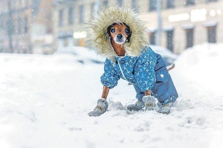 - Чем мельче пес, тем страшнее мороз!
