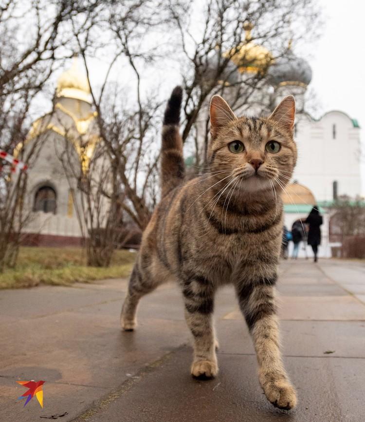 Стройка не мешает местным котам чувствовать себя в безопасности
