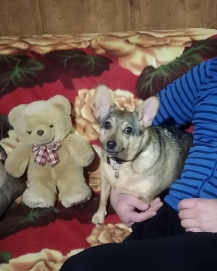 Собаку забрали хорошие и добрые люди. Фото: ВОЛОНТЁРСКОЕ ДВИЖЕНИЕ ПОМОЩИ ЖИВОТНЫМ г. САКИ/VK