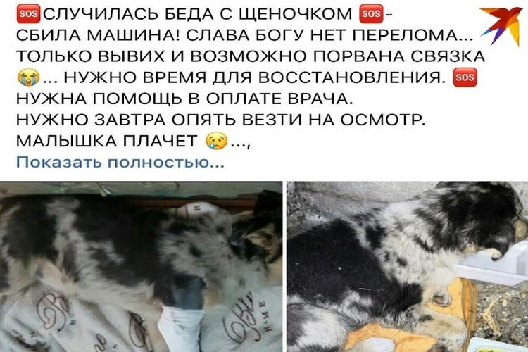 Собачку нашли в Нальчике у дороги