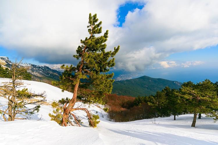 Крым прекрасен и летом и зимой