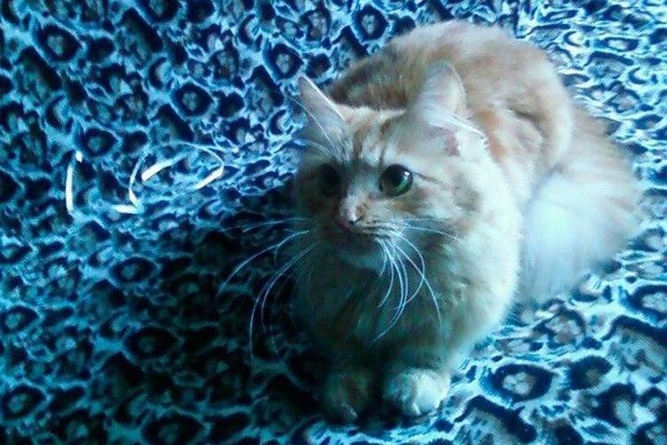У кошки был стресс после посещение ветклиники Фото: скрин страницы хозяина кошки