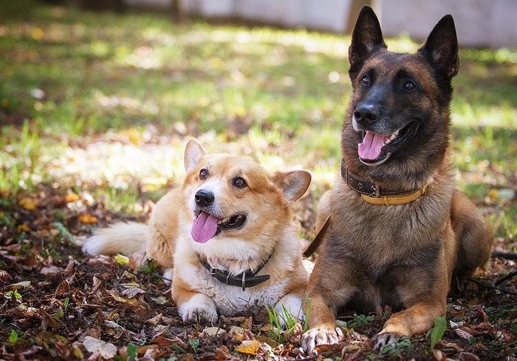 Рыжий и Зигер не только сослуживцы, но еще и лучшие друзья