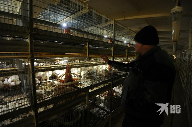 Если решение о сокращении работников не удастся изменить, то всех птиц забьют.