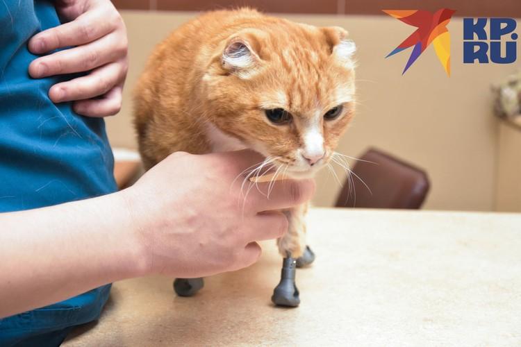 Протезы ставили полгода, но теперь кот доволен.