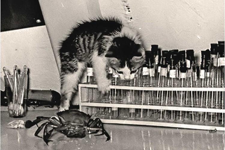 Котенок Кессонка тоже жил в подводном доме. Его доставили на станцию в резиновом мешке. Фото: Из архива Виталия Сычева.