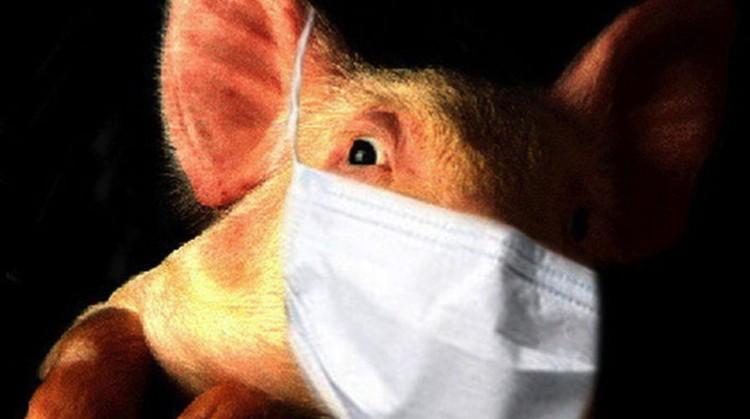 """Вирус свиного гриппа может. где-нибудь """"отсидеться"""", мутировать и опять напасть на людей."""