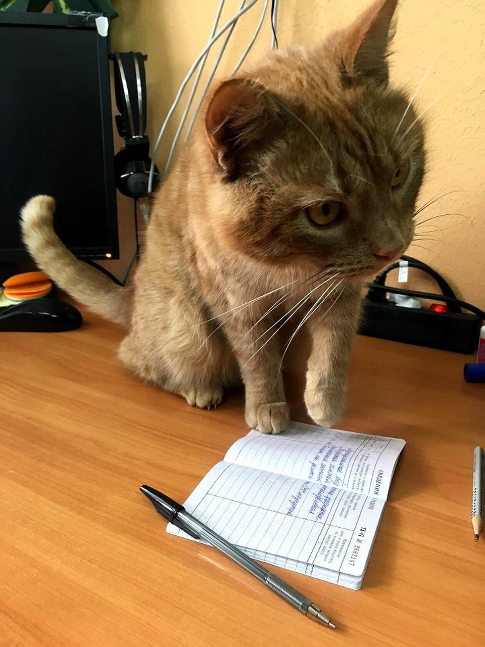 Убит кот-библиотекарь...