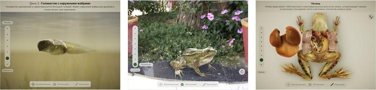 Приложение с дополненной реальностью поместит виртуальную лягушку в реальный мир прямо на глазах у школьника. Фото: предоставлено компанией Apple