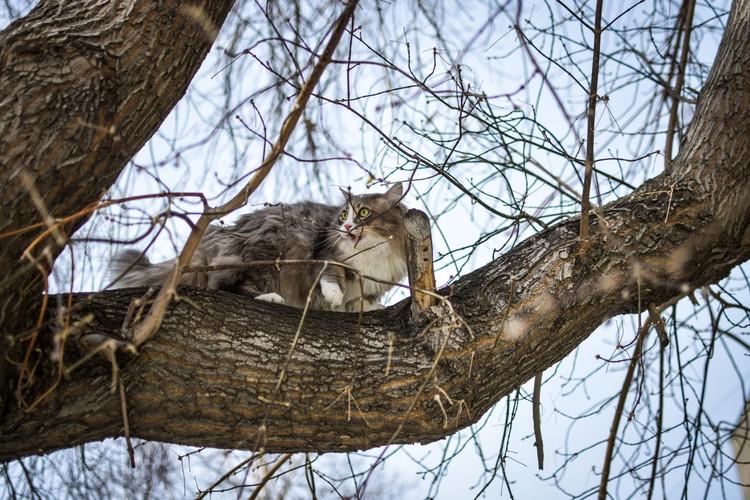 Спасатель котиков говорит, что в 90 процентах случаев животные могут слезть с дерева самостоятельно.