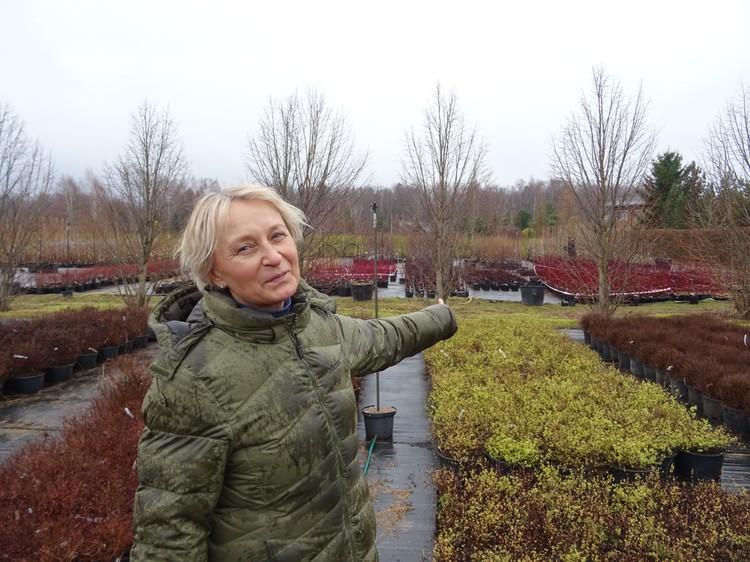 Хозяйка питомника осматривает ряды селекционного боярышника, который вскоре отправится на озеленение Ржевского мемориала, и мы говорим о еще одном печальном, но очевидном последствии.