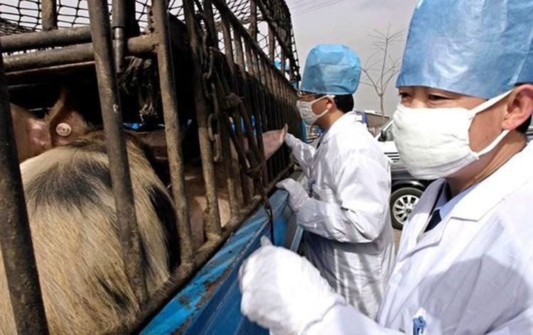 Первую в 21 веке пандемию собъявил из-за свиного гриппа