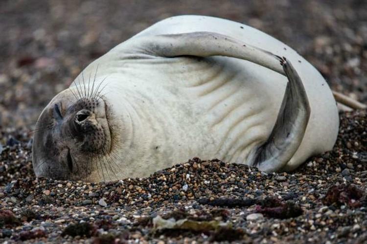 «Приятный сон». Фото Кирилла Горелова («Эти забавные животные»).