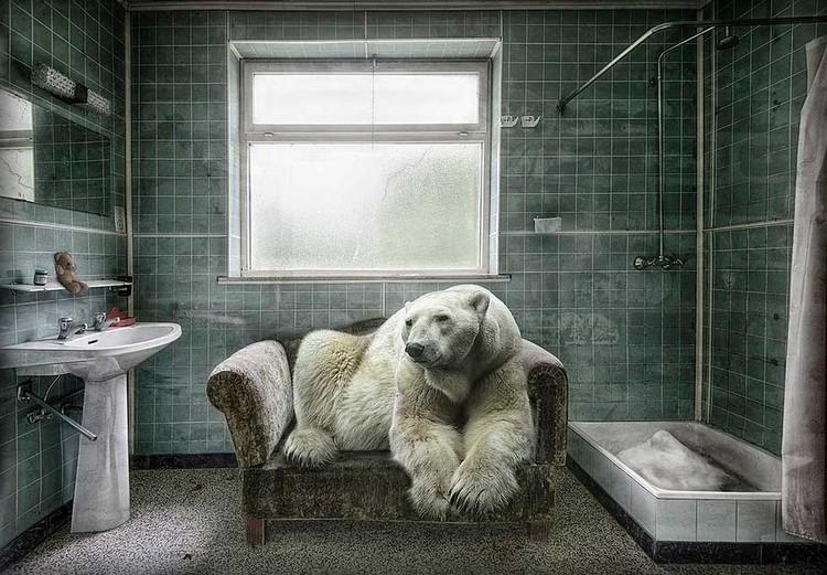«Домашний полярный медведь» Марселя ван Балкена - постановочное фото о том, что человек слишком далеко зашел на антарктические земли - исконные владения этих гигантов.