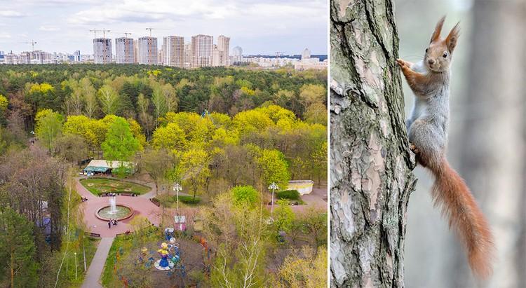 Жилой комплекс «Парк Челюскинцев» строится у самых границ огромного паркового массива в центре города.