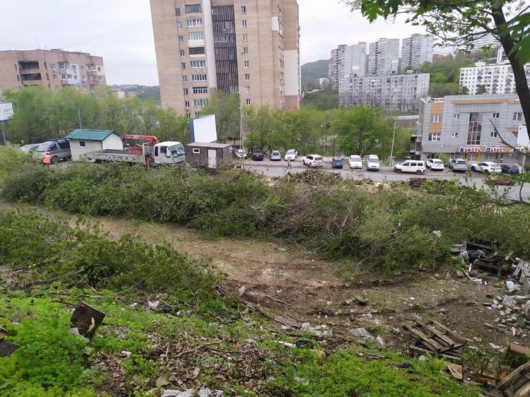 Деревья массово вырубают вдоль проспекта