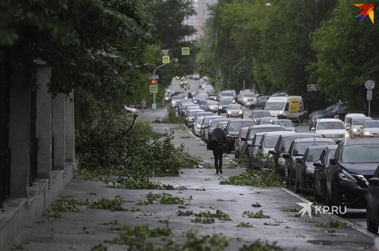 Под натиском стихии повалило деревья в Харитоновском парке