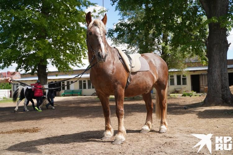 Пикник попал в центр истощенным жеребенком и превратился в красавца-коня