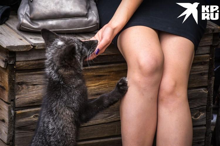 Ручных лисиц лучше держать в частном доме, а не в квартире.