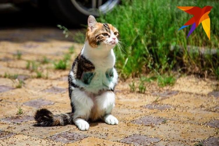 Кошке ищут новый дом