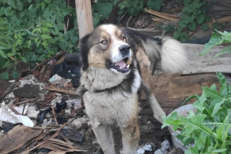 Волонтеры ищут собаке передержку. Фото: предоставлено Ириной Роут.