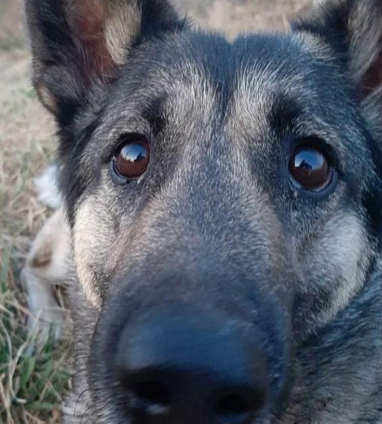 У Чучи были очень добрые глаза. Фото: личный архив Екатерины Зубковой