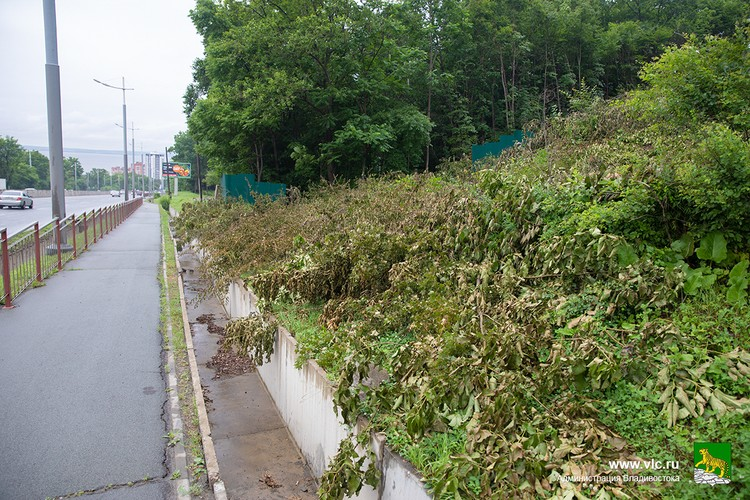 Среди уничтоженных деревьев такие породы, как дуб, осина, клен и другие. Фото: сайт администрации Владивостока