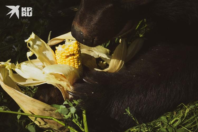 А вот кукурузу от кожуры очистил.