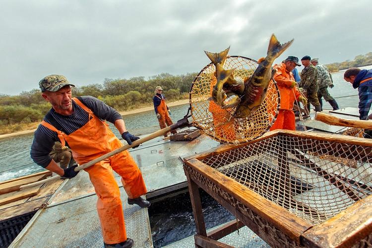 Испокон веков кунашакская рыба славилась своими вкусовыми качествами. Фото: АО «Россельхозбанк»