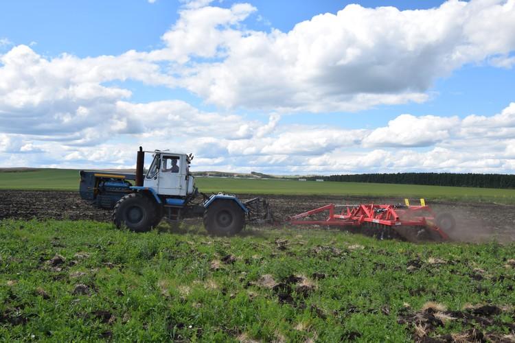 В прошлом году фермеры собрали в общей сложности порядка 5 тысяч тонн пшеницы, ячменя и подсолнечника. Фото: АО «Россельхозбанк»